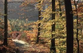 Perseignes en automne