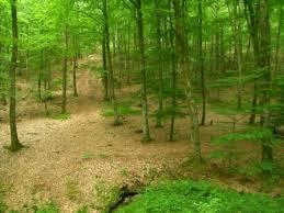 Perseigne en forêt